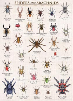 Spiders & Arachnids Other Animals Jigsaw Puzzle