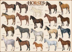 Horses Pattern / Assortment Jigsaw Puzzle