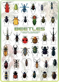 Beetles Pattern / Assortment Jigsaw Puzzle