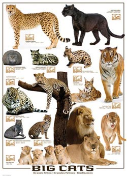 Big Cats Pattern / Assortment Jigsaw Puzzle