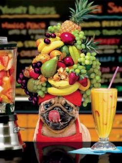 Fruity Pug Food and Drink Large Piece