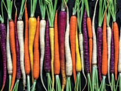 Rainbow Carrot Path Photography Large Piece