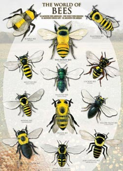 The World of Bees Butterflies and Insects Jigsaw Puzzle