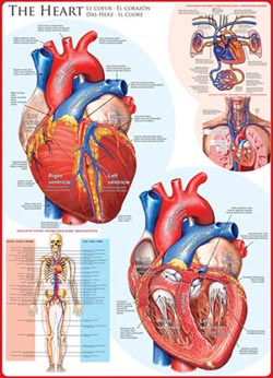 The Heart Science Jigsaw Puzzle