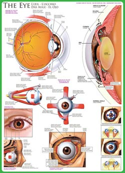 The Eye Science Jigsaw Puzzle
