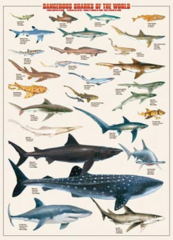 Dangerous Sharks of the World Collage Jigsaw Puzzle