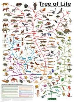 Evolution - The Tree of Life Science Jigsaw Puzzle