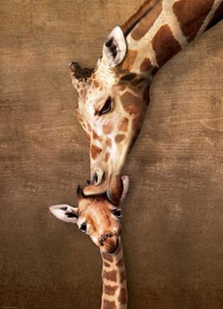 Giraffe Mother's Kiss Baby Animals Jigsaw Puzzle