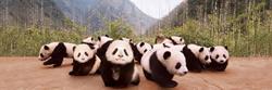 Panda Cubs Pandas Jigsaw Puzzle