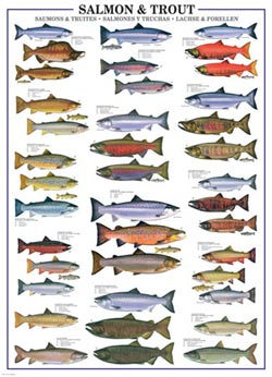 Salmon and Trout Pattern / Assortment Jigsaw Puzzle