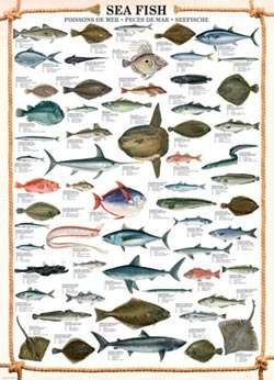 Sea Fish Marine Life Jigsaw Puzzle