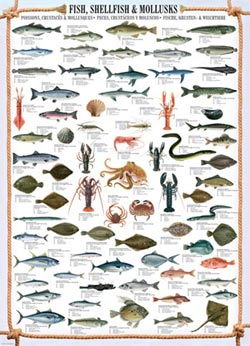 Fish Shellfish Mollusks Fish Jigsaw Puzzle
