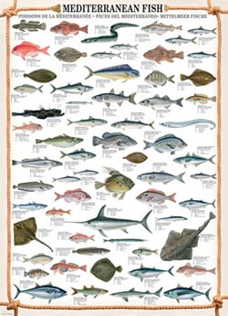 Mediterranean Fish Pattern / Assortment Jigsaw Puzzle