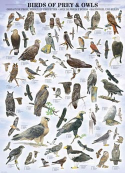 Birds of Prey and Owls Pattern / Assortment Jigsaw Puzzle