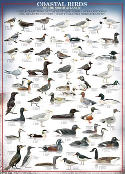 Coastal Birds of the North Atlantic Educational Jigsaw Puzzle
