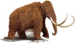 I Am Woolly Mammoth (Mini) Animals Miniature Puzzle