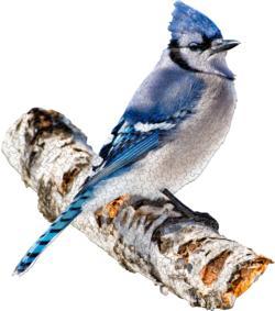I Am Blue Jay Birds Jigsaw Puzzle
