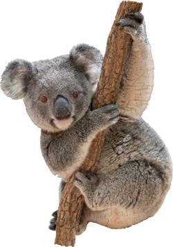 I Am Lil' Koala Animals Children's Puzzles