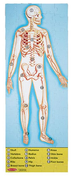 Human BodyFloor Science Children's Puzzles
