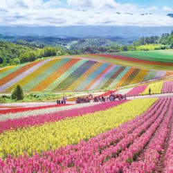 Rainbow Fields Japan Large Piece
