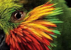 Edward's Fig Parrot Birds Jigsaw Puzzle