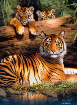 Quiet Fire Tigers Jigsaw Puzzle