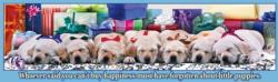 Holiday Puppies Christmas Panoramic