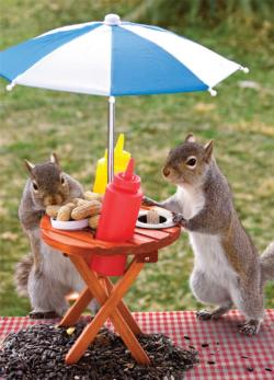 Squirrel Feeder, Lunchtime Picnic Jigsaw Puzzle