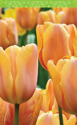 Spring Tulips (Bridge Tally Sheets)