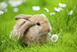 Adorable Bunny Other Animals Children's Puzzles