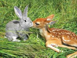 Animal Attraction (Unlikely Friendships) Deer Jigsaw Puzzle