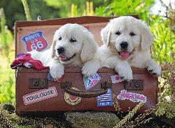 Traveling Pups Photography Jigsaw Puzzle