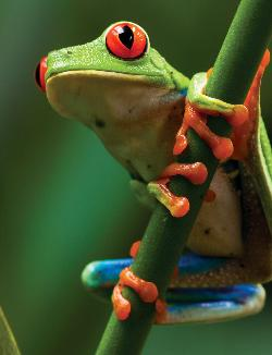 Tree Frog (Animal Planet) Nature Children's Puzzles