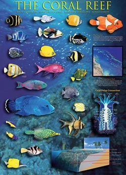 The Coral Reef Under The Sea Jigsaw Puzzle