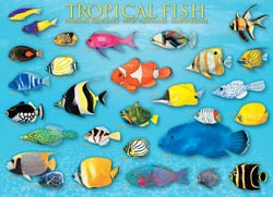 Tropical Fish Marine Life Jigsaw Puzzle