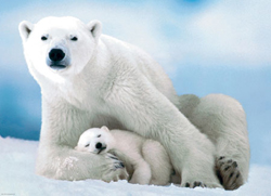 Polar Bear and Baby Bears Jigsaw Puzzle