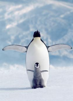 Penguin & Chick (Small Box)