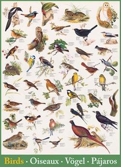 Birds Birds Jigsaw Puzzle