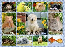 My First Pet Baby Animals Children's Puzzles