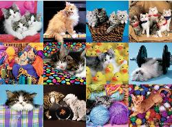Kitten Collage Baby Animals Jigsaw Puzzle