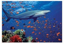 Shark Fish Children's Puzzles