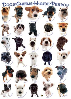 Dog Breeds Pattern / Assortment Jigsaw Puzzle