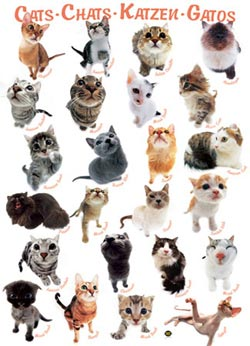 Cat Breeds Pattern / Assortment Jigsaw Puzzle