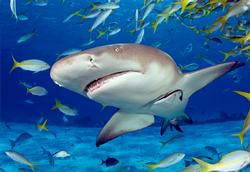 Shark Photography Jigsaw Puzzle