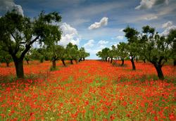 Poppy Field Flowers Jigsaw Puzzle