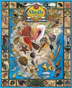 Shells of our Shores Beach Jigsaw Puzzle