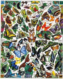 Butterflies of the World Butterflies and Insects Jigsaw Puzzle