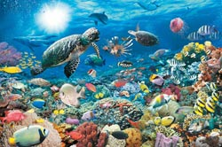 Beneath the Sea, 5000 pcs Marine Life Jigsaw Puzzle