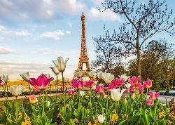 Eiffel Tulips Paris Jigsaw Puzzle