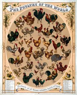 Poultry of the World Chickens & Roosters Jigsaw Puzzle